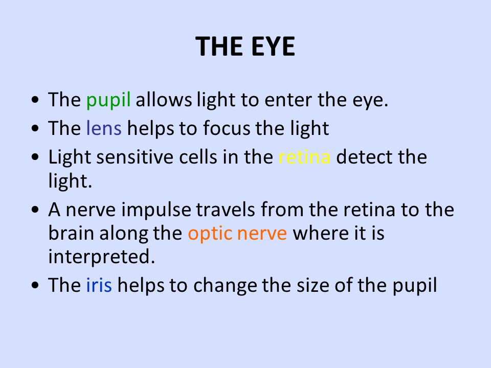 THE EYE The pupil allows light to enter the eye.