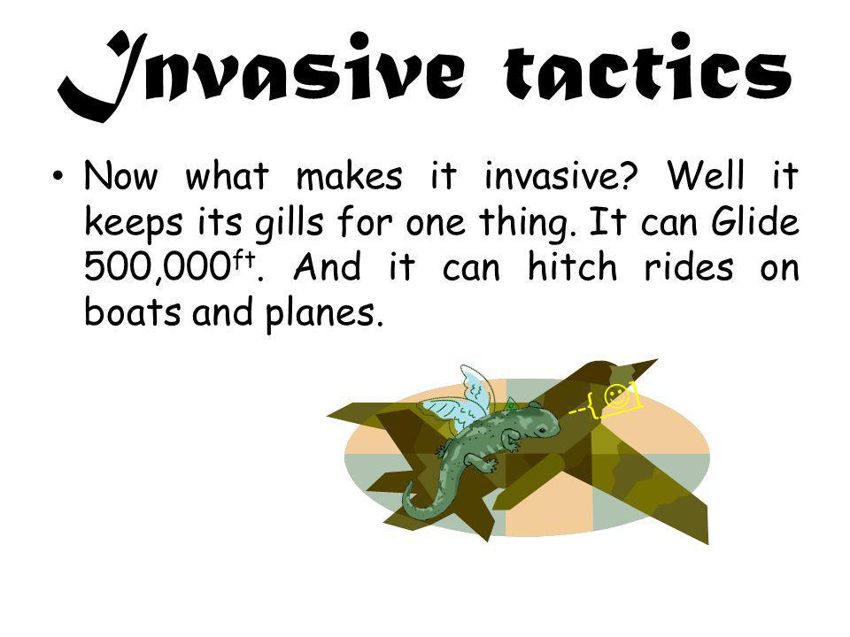 Invasive tactics Now what makes it invasive. Well it keeps its gills for one thing.