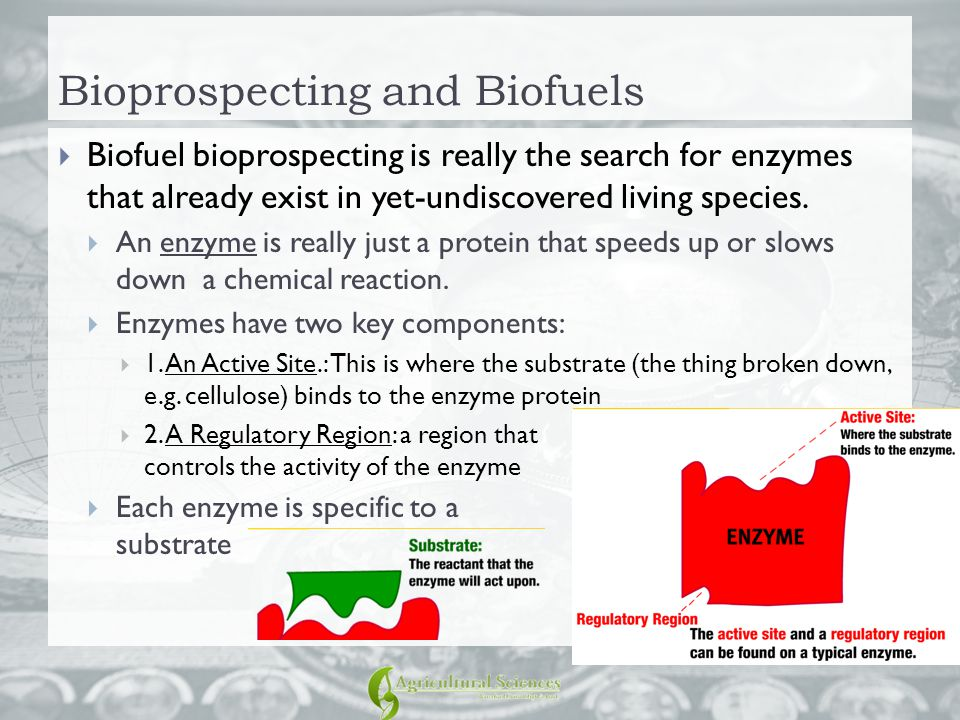Bioprospecting and Biofuels  Biofuel bioprospecting is really the search for enzymes that already exist in yet-undiscovered living species.  An enzy