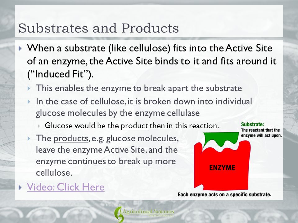 """Substrates and Products  When a substrate (like cellulose) fits into the Active Site of an enzyme, the Active Site binds to it and fits around it (""""I"""