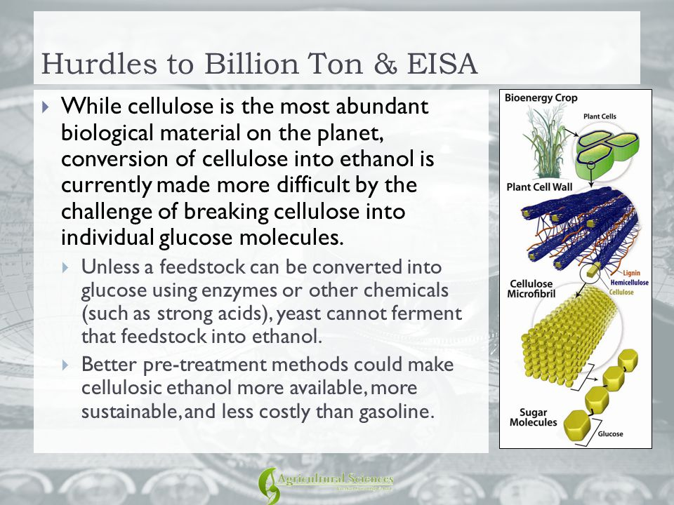 Hurdles to Billion Ton & EISA  While cellulose is the most abundant biological material on the planet, conversion of cellulose into ethanol is curren