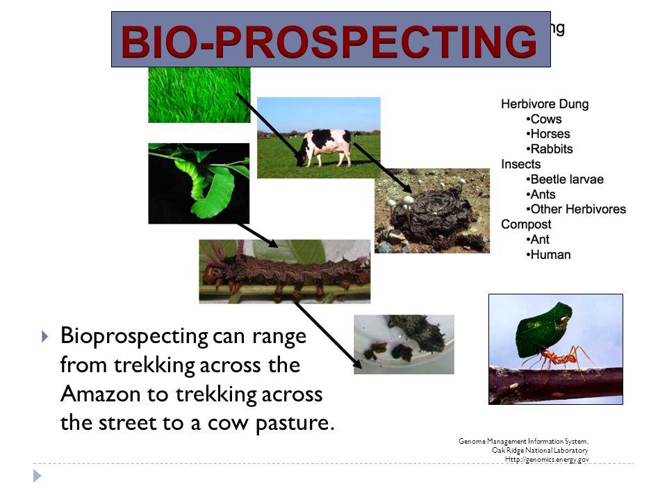 Genome Management Information System, Oak Ridge National Laboratory Http://genomics.energy.gov  Bioprospecting can range from trekking across the Ama