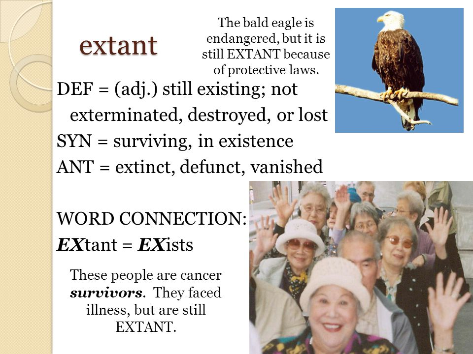 extant DEF = (adj.) still existing; not exterminated, destroyed, or lost SYN = surviving, in existence ANT = extinct, defunct, vanished WORD CONNECTION: EXtant = EXists These people are cancer survivors.