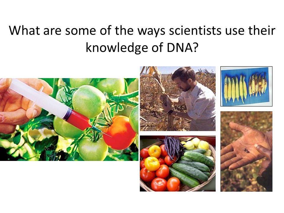 Genetic Engineering: Agriculture Agriculture Manufacturing Medicine