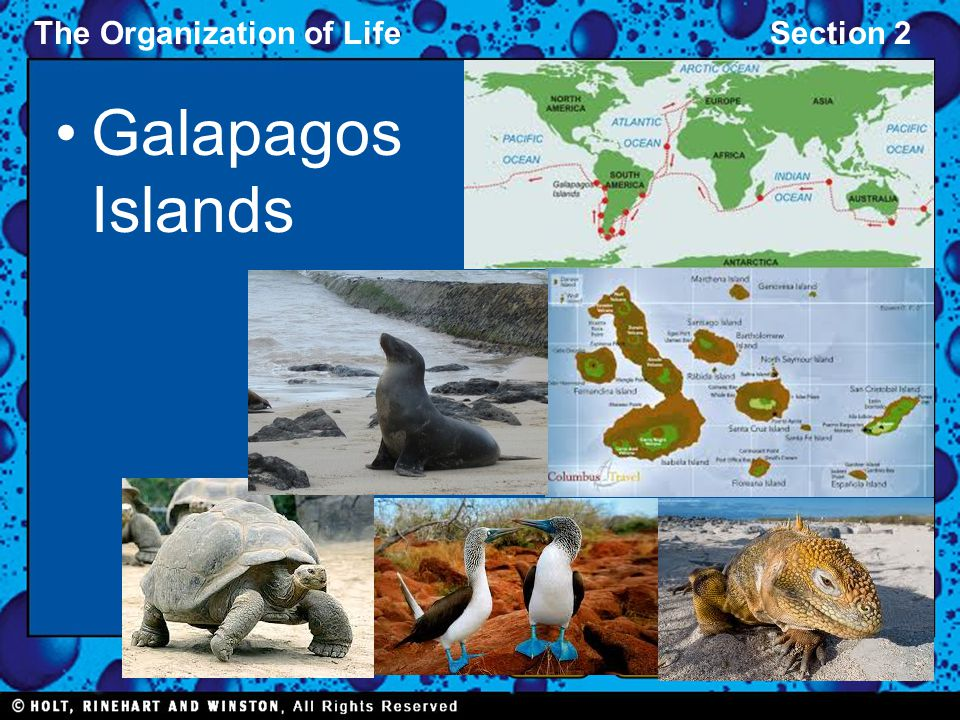 The Organization of LifeSection 2 Galapagos Islands