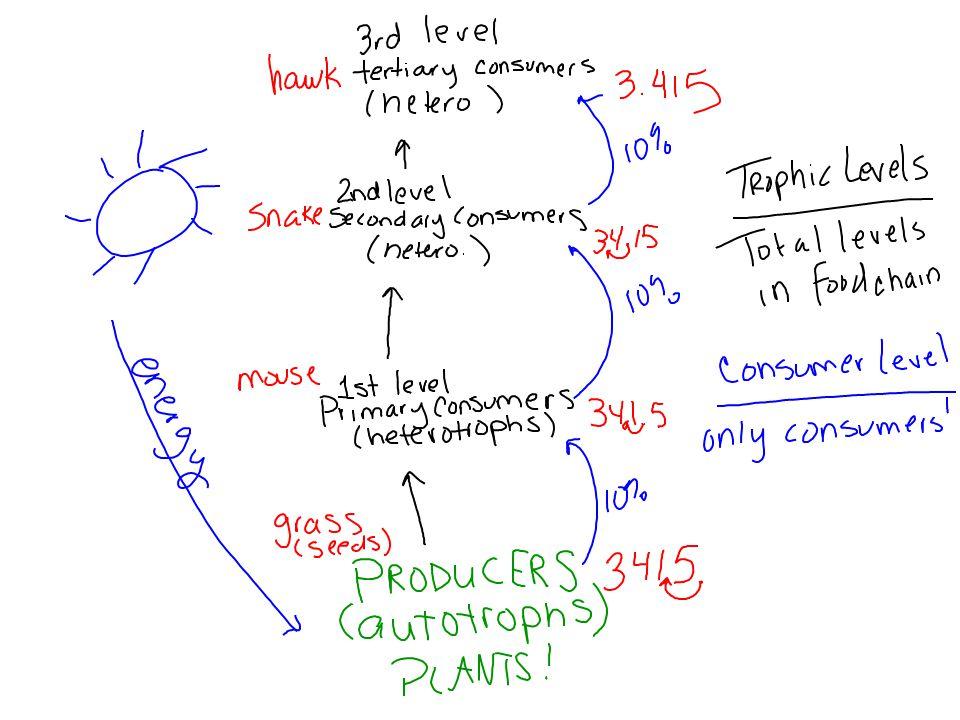 UNIT 2 SUMMATIVE ASSESSMENT Friday 11/8 ONLINE TEXTBOOK Biogeochemical Cycles – ch.
