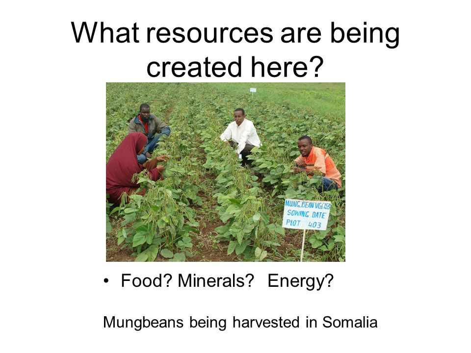 What resources are being created here? Food? Minerals? Energy? Mungbeans being harvested in Somalia