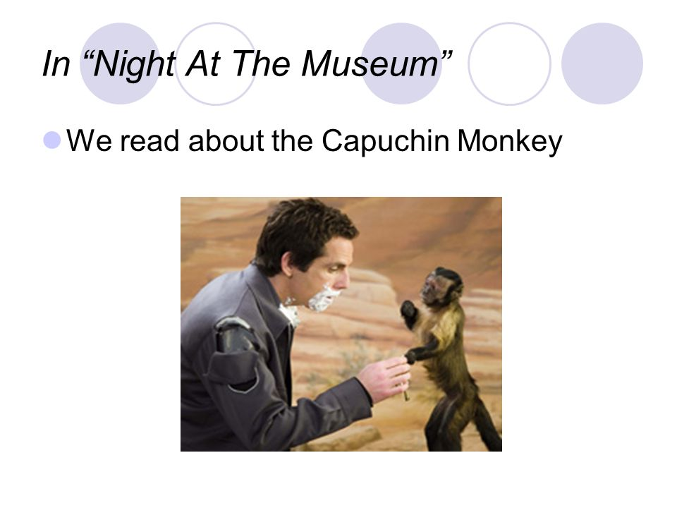"In ""Night At The Museum"" We read about the Capuchin Monkey"