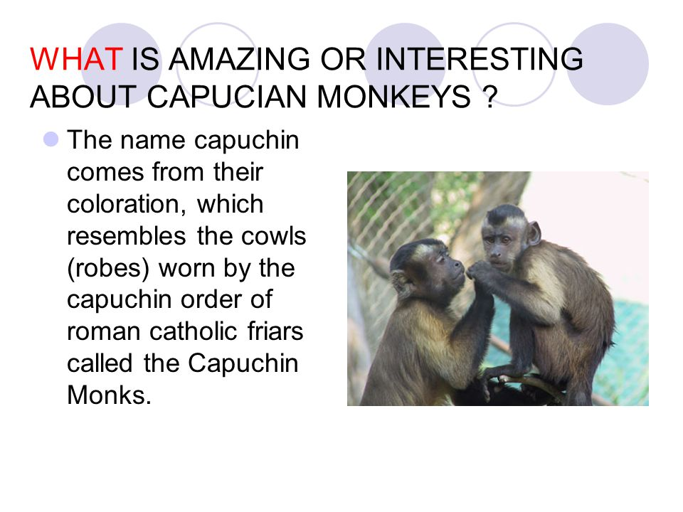 WHY ARE CAPUCIAN MONKEYS IMPORTANT TO OUR LIVES TODAY AND/ OR TO THE FUTURE OF HUMANS ON EARTH .