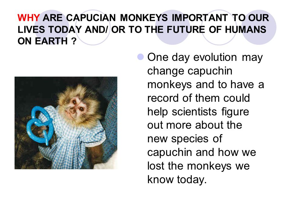 WHY ARE CAPUCIAN MONKEYS IMPORTANT TO OUR LIVES TODAY AND/ OR TO THE FUTURE OF HUMANS ON EARTH ? One day evolution may change capuchin monkeys and to
