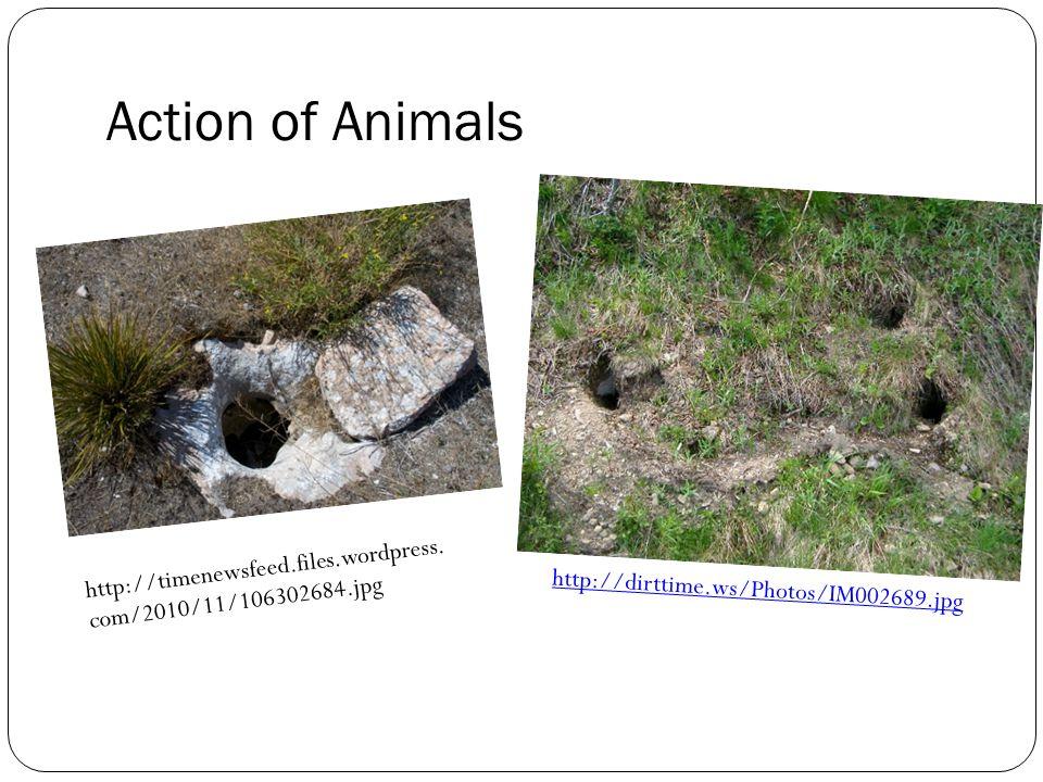 http://dirttime.ws/Photos/IM002689.jpg Action of Animals http://timenewsfeed.files.wordpress.
