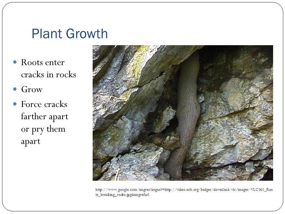 http://www.google.com/imgres?imgurl=http://www.wkmctv.com/geo_images/root_wedging.jpg&imgrefurl Plant Growth