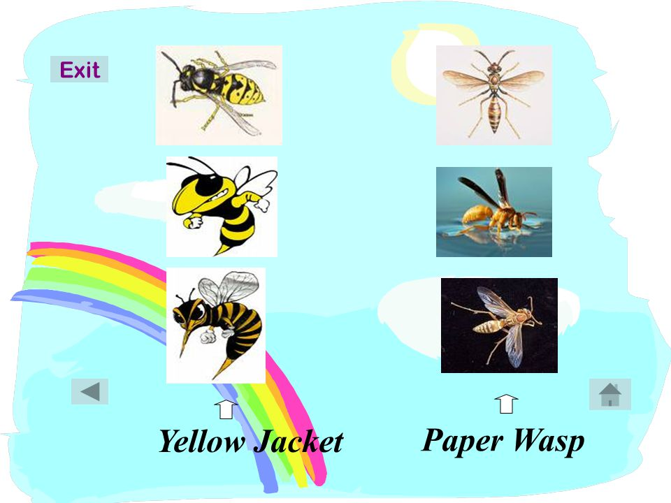Bumble Bee Honey Bee Exit