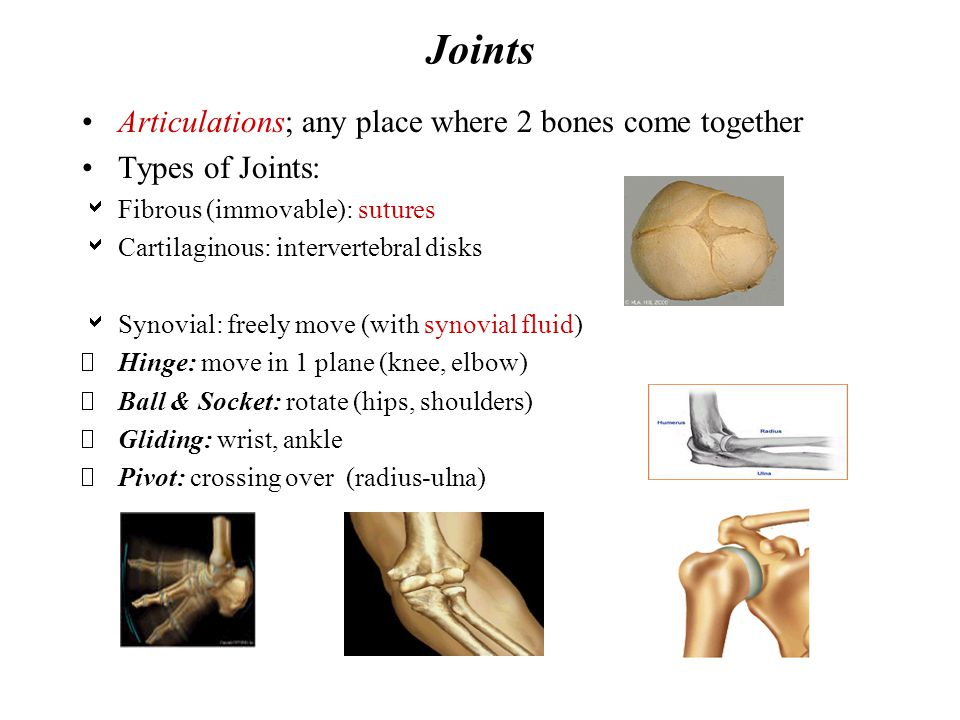 Joints Articulations; any place where 2 bones come together Types of Joints:  Fibrous (immovable): sutures  Cartilaginous: intervertebral disks  Sy