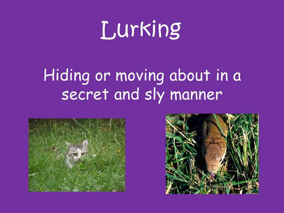Lurking Hiding or moving about in a secret and sly manner