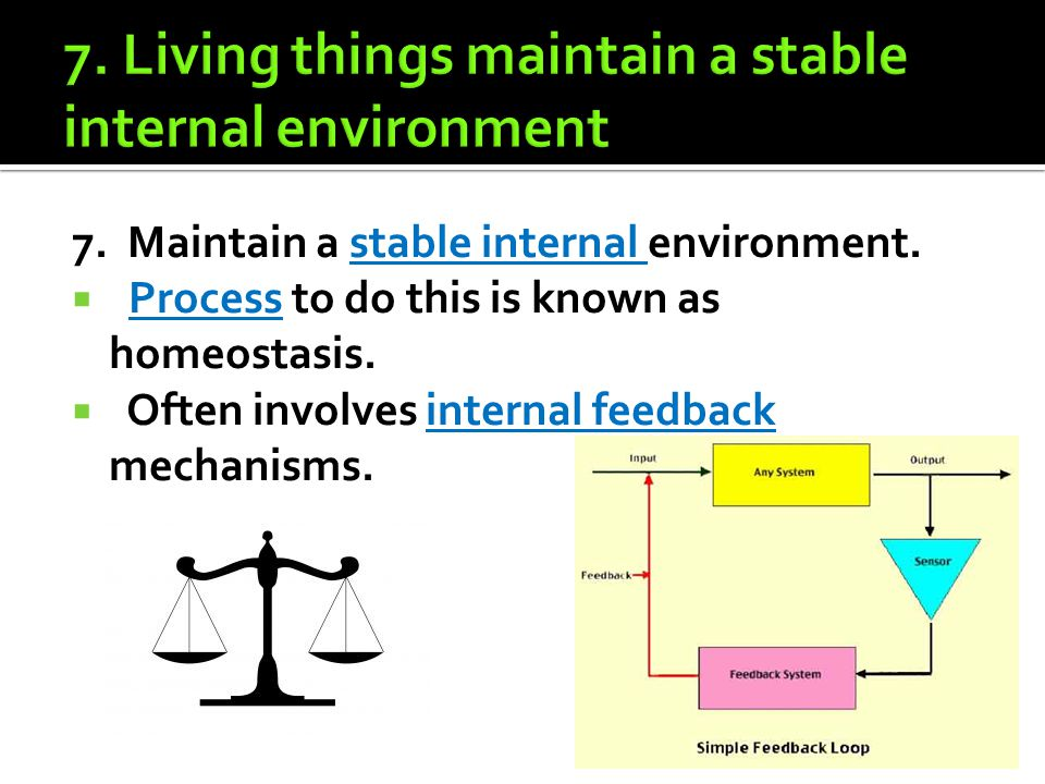 7. Maintain a stable internal environment.  Process to do this is known as homeostasis.  Often involves internal feedback mechanisms.