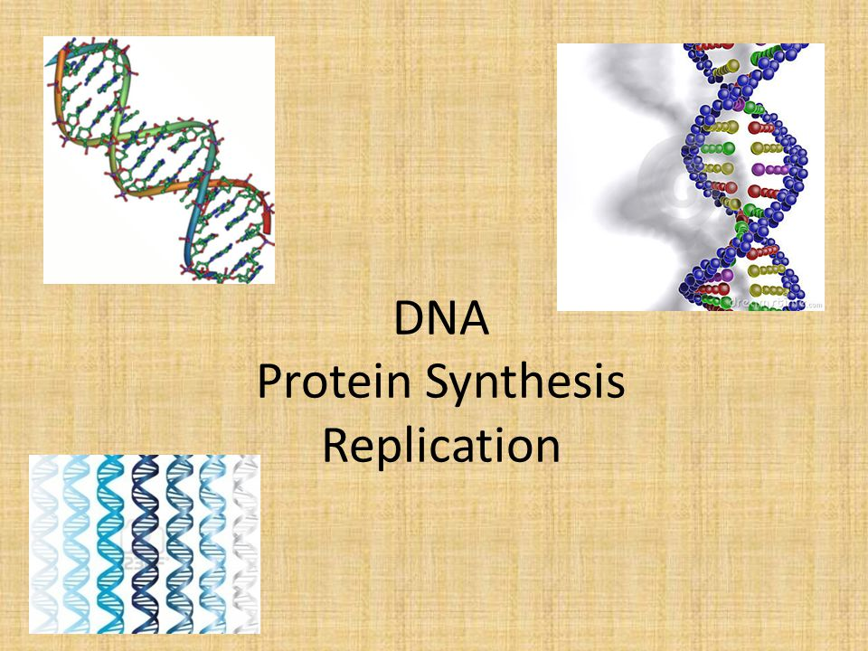DNA Protein Synthesis Replication
