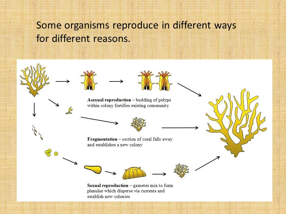 Some organisms reproduce in different ways for different reasons.