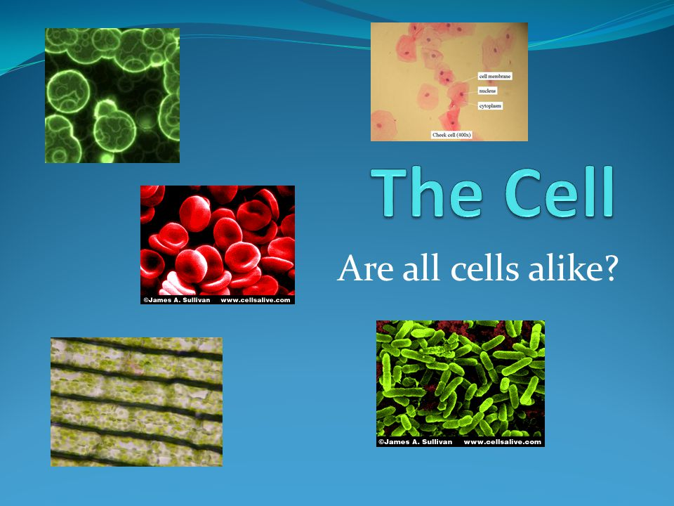 Are all cells alike?