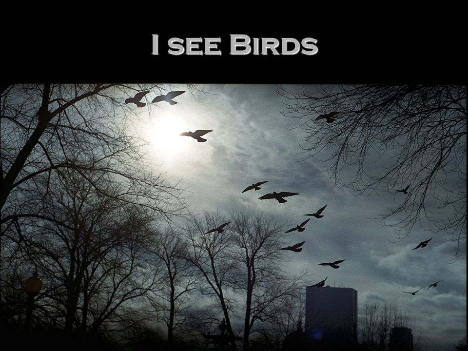 I see Birds