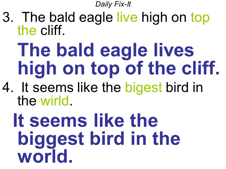 Daily Fix-It 3.The bald eagle live high on top the cliff.