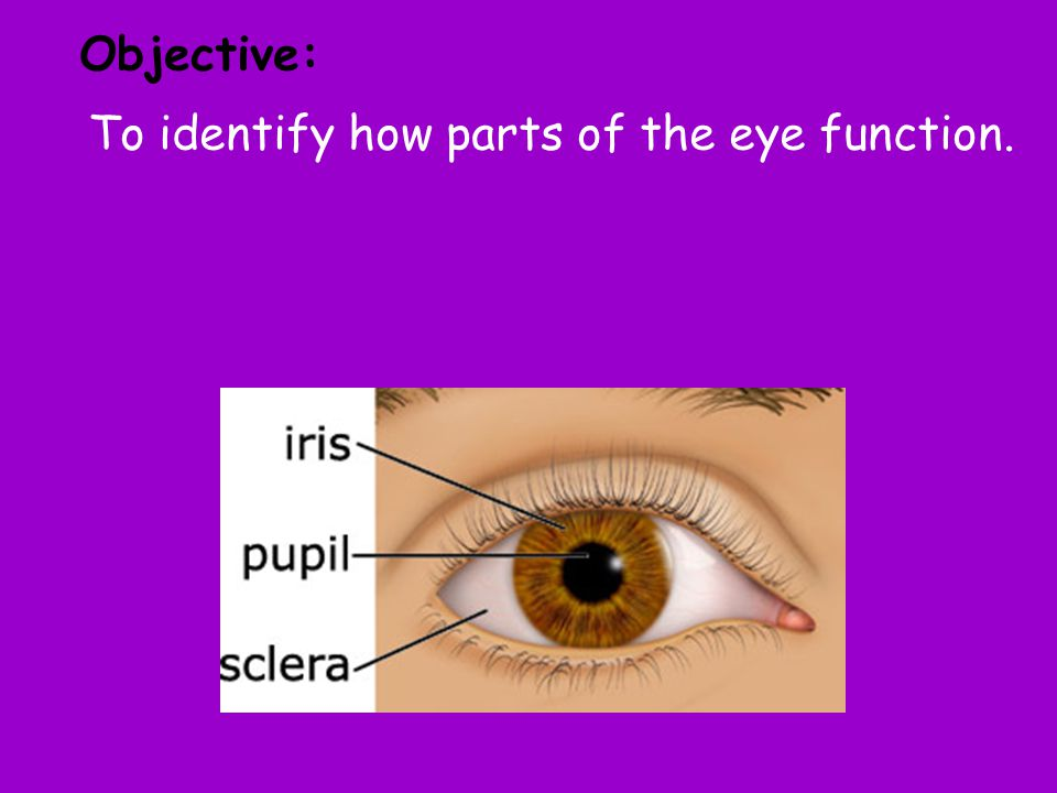 Objective: To identify how parts of the eye function.