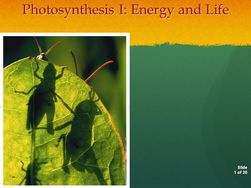 Autotrophs and Heterotrophs Living things need energy to survive.