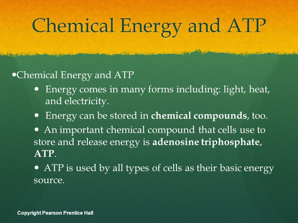 Chemical Energy and ATP ATP consists of: adenine ribose (a 5-carbon sugar) 3 phosphate groups Adenine ATP Ribose 3 Phosphate groups The three phosphate groups are the key to ATP s ability to store and release energy.