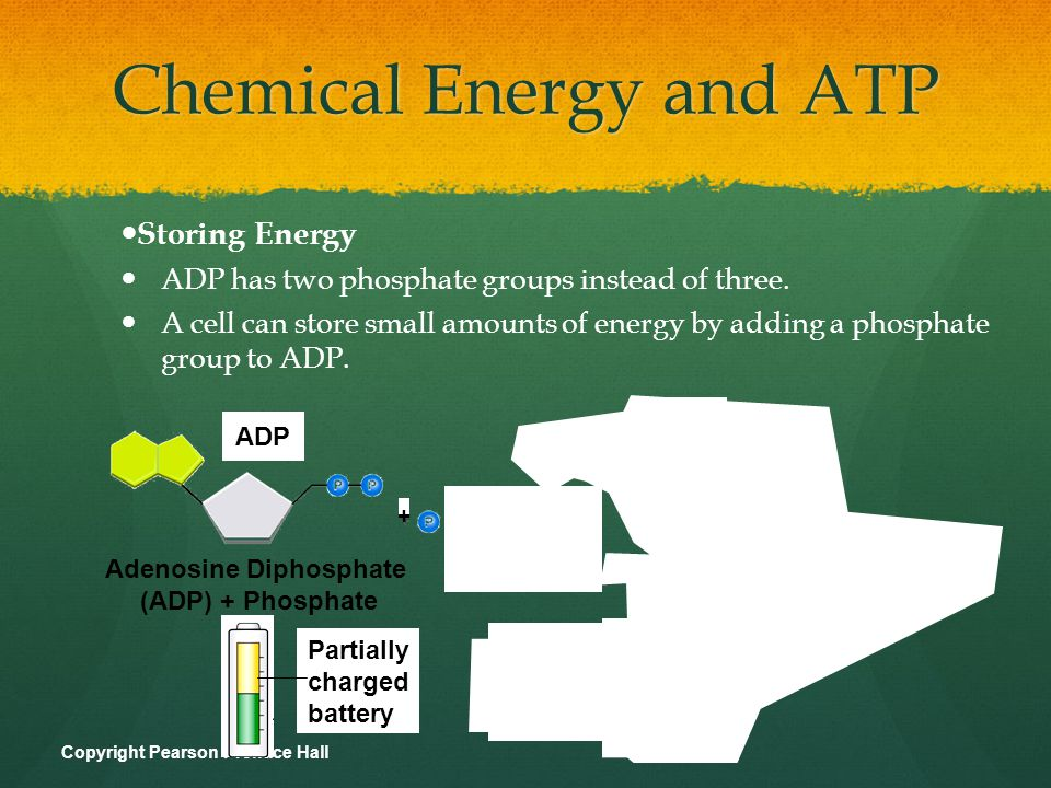Chemical Energy and ATP Releasing Energy Energy stored in ATP is released by breaking the chemical bond between the second and third phosphates.