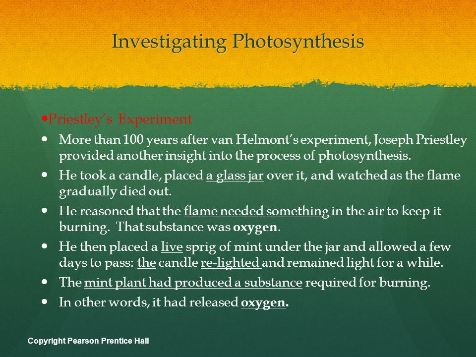 Investigating Photosynthesis Priestley's Experiment More than 100 years after van Helmont's experiment, Joseph Priestley provided another insight into