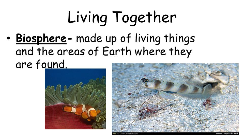 Living Together Biosphere- made up of living things and the areas of Earth where they are found. http://creationwiki.org/Symbiosis http://www.uwphoto.