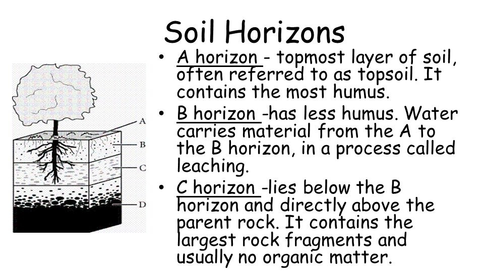 Thick Tops, Rocky Bottoms What factors determine how long it takes for soils to form.
