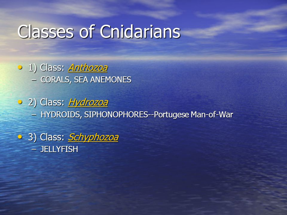 Classes of Cnidarians 1) Class: Anthozoa 1) Class: AnthozoaAnthozoa –CORALS, SEA ANEMONES 2) Class: Hydrozoa 2) Class: HydrozoaHydrozoa –HYDROIDS, SIPHONOPHORES--Portugese Man-of-War 3) Class: Schyphozoa 3) Class: SchyphozoaSchyphozoa –JELLYFISH