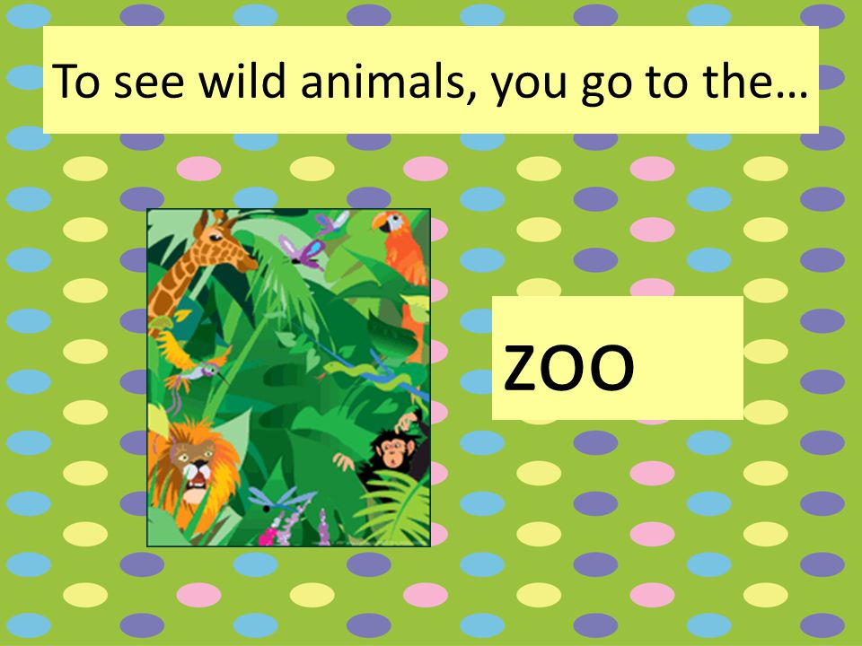 To see wild animals, you go to the… zoo