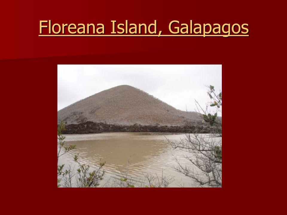 Floreana Island, Galapagos Floreana Island, Galapagos