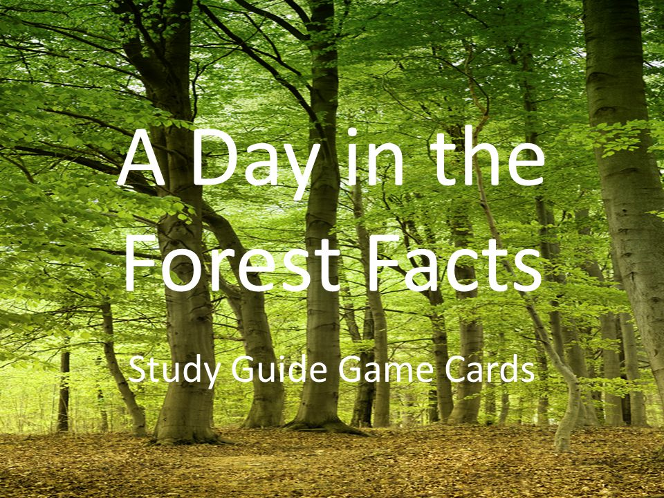 A Day in the Forest Facts Study Guide Game Cards