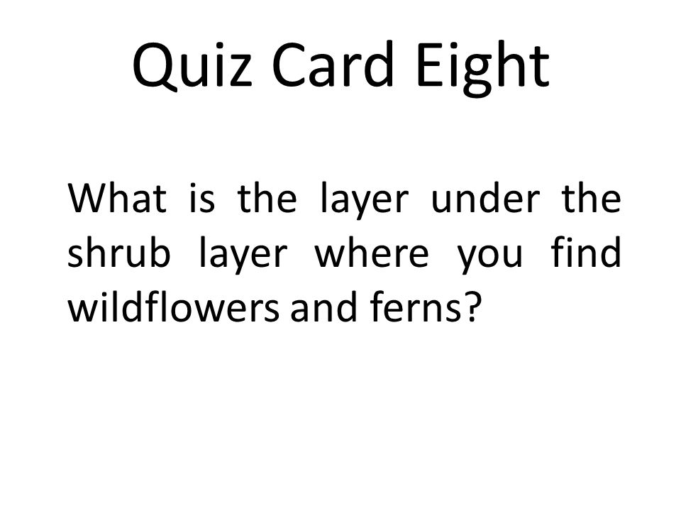Quiz Card Eight What is the layer under the shrub layer where you find wildflowers and ferns