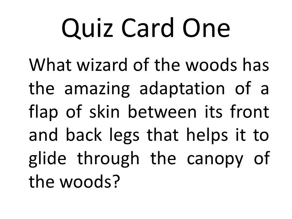 Answer Quiz Card Sixteen The woodland swamp.