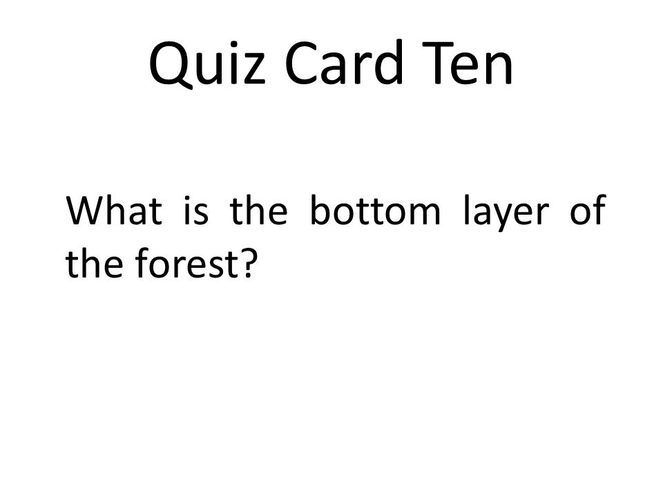 Quiz Card Ten What is the bottom layer of the forest