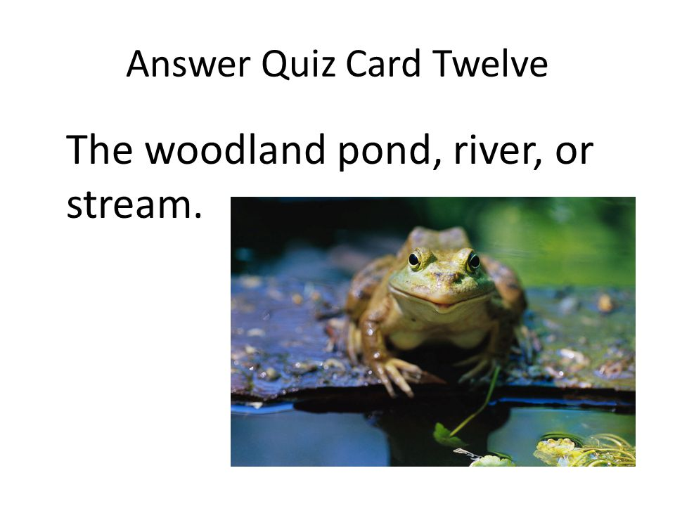 Answer Quiz Card Twelve The woodland pond, river, or stream.