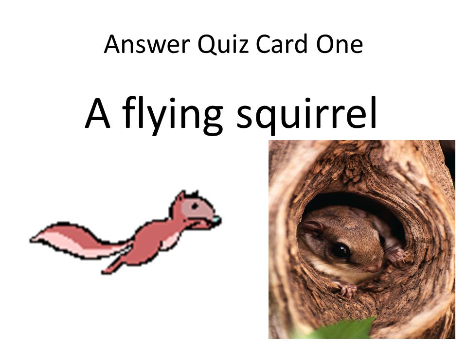 Quiz Card Two What wizard of the woods has the amazing adaptation of being able to stand still and be completely invisible?