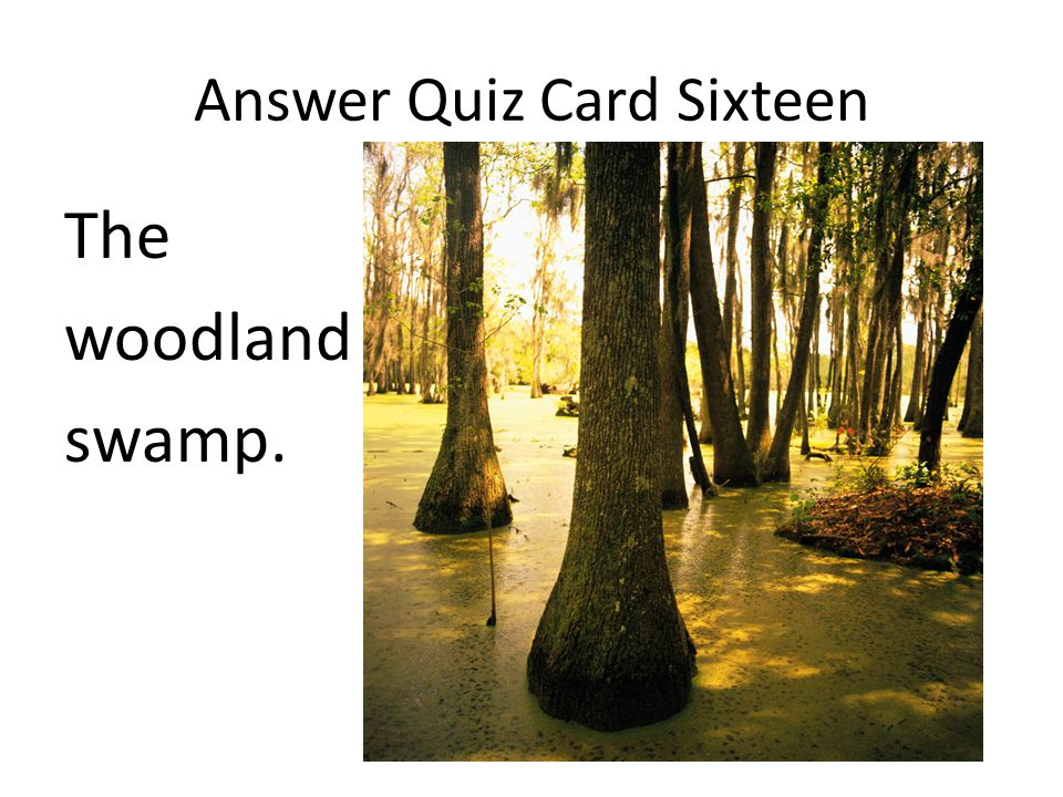 Answer Quiz Card Sixteen The woodland swamp.