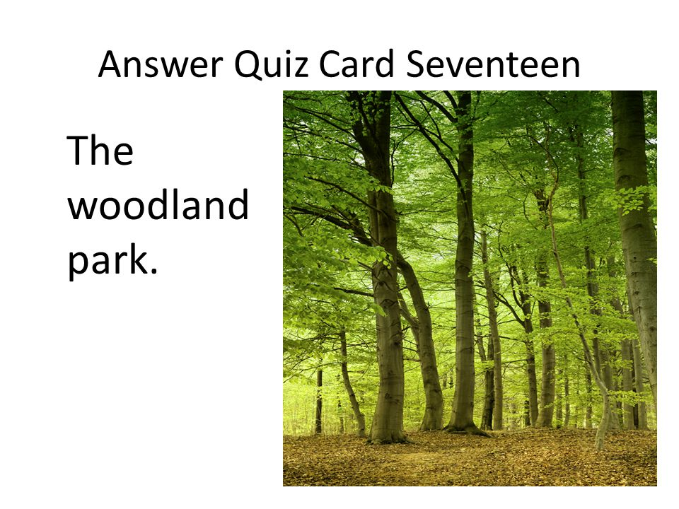 Answer Quiz Card Seventeen The woodland park.