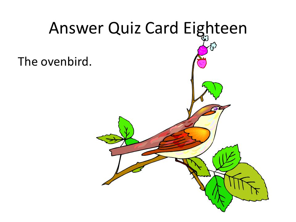 Answer Quiz Card Eighteen The ovenbird.