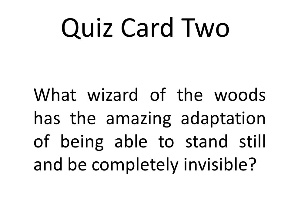 Answer Quiz Card Twelve The woodland pond, river, or stream.