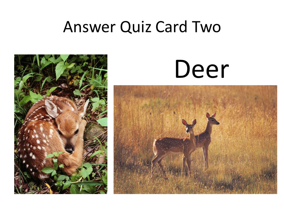 Quiz Card Eight What is the layer under the shrub layer where you find wildflowers and ferns?
