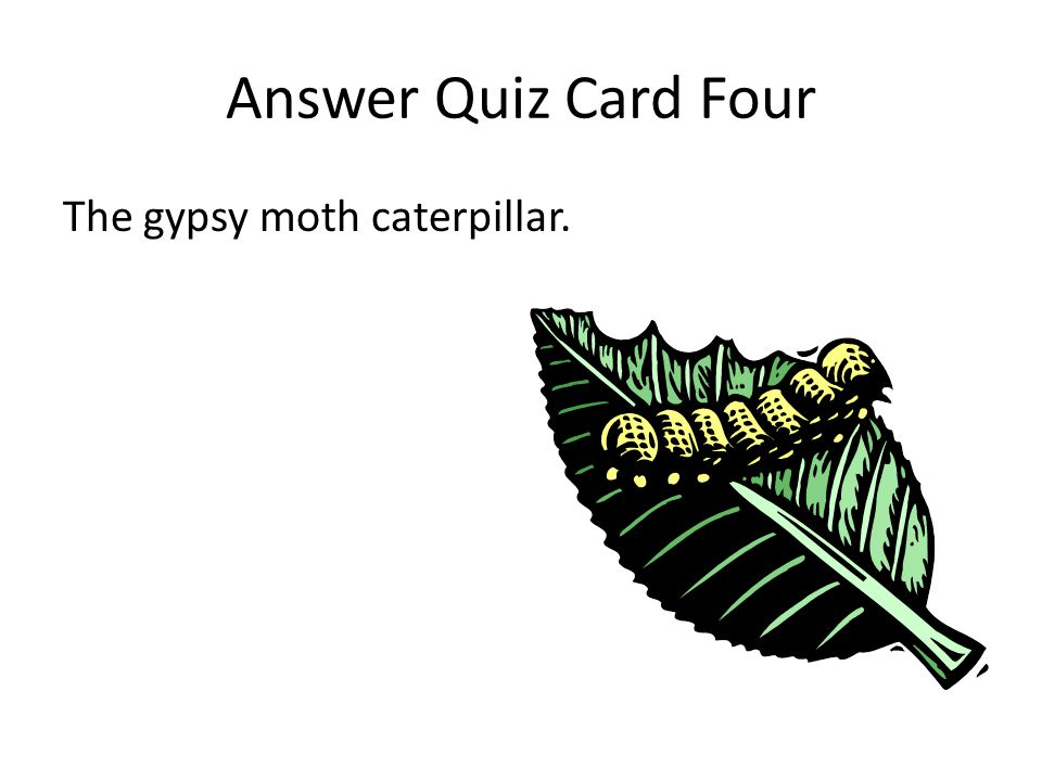 Quiz Card Ten What is the bottom layer of the forest?