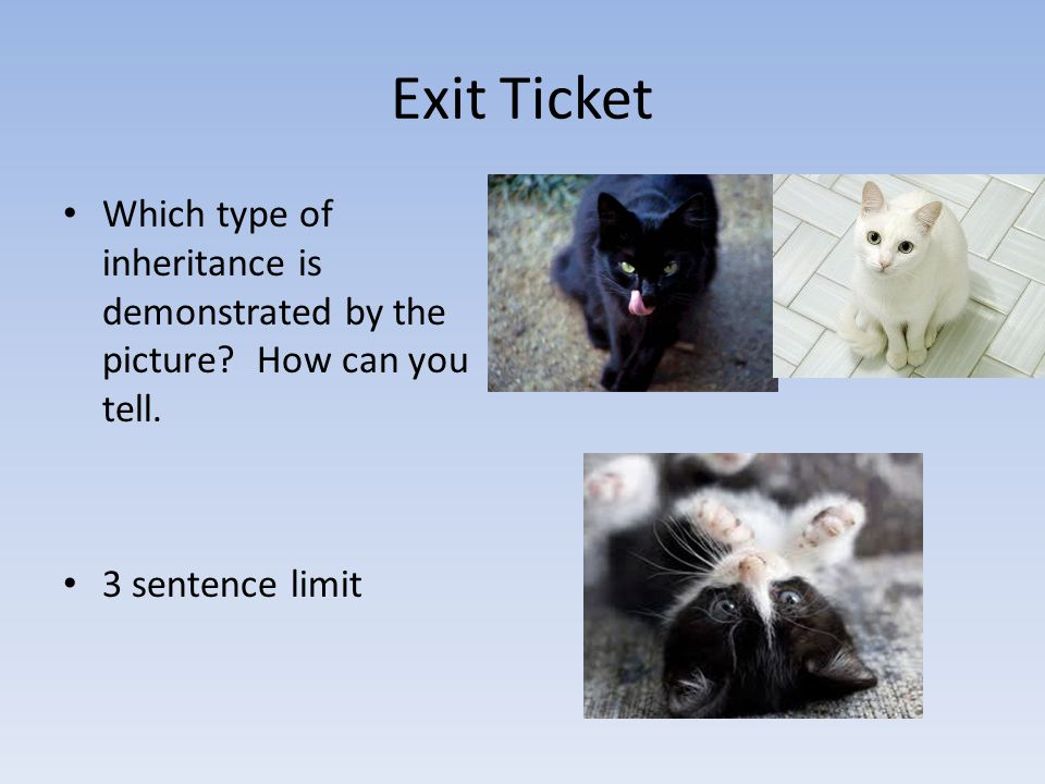 Exit Ticket Which type of inheritance is demonstrated by the picture.
