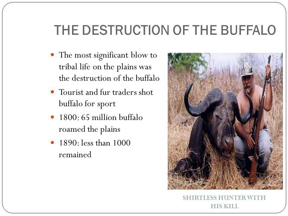 THE DESTRUCTION OF THE BUFFALO The most significant blow to tribal life on the plains was the destruction of the buffalo Tourist and fur traders shot buffalo for sport 1800: 65 million buffalo roamed the plains 1890: less than 1000 remained SHIRTLESS HUNTER WITH HIS KILL