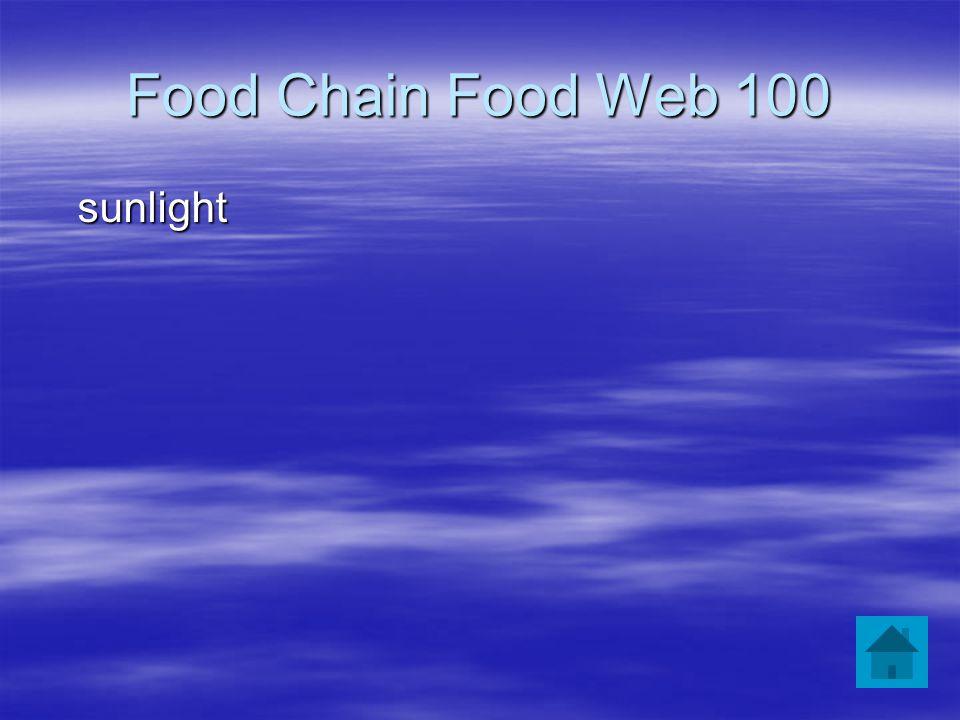 Food Chain Food Web 100 sunlight